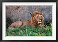 Framed Portrait of Male African Lion, Tanzania