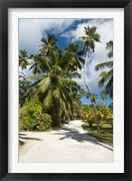Framed Seychelles, La Digue, Palm lined country path