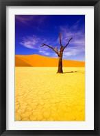 Framed Skeleton Trees in Dead Vlei, Namibia