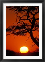 Framed Silhouetted Tree Branches, Kalahari Desert, Kgalagadi Transfrontier Park, South Africa