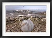 Framed Southern giant petrel bird, Antarctic Peninsula