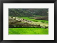 Framed Spectacular green rice field in rainy season, Ambalavao, Madagascar