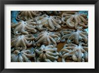 Framed Tanzania, Zanzibar, StoneTown, Darajani Market, Octopus