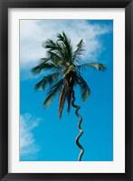 Framed Tanzania: Zanzibar, curly-que trunk of palm tree inland