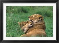 Framed Tanzania, Ngorongoro Crater. African lion family