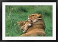 Framed Tanzania, Ngorongoro Crater. African lion family