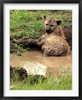 Framed Spotted Hyaena, wildlife, Hluhulwe GR, South Africa
