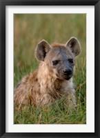 Framed Spotted Hyena, Mombo Area, Chief's Island, Okavango Delta, Botswana