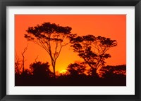 Framed Trees Silhouetted by Dramatic Sunset, South Africa