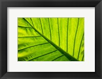 Framed Tropical foliage in Alexandria and the Amphitheater, Egypt