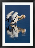 Framed White Pelican bird, Lake Nakuru National Park, Kenya
