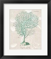 Gorgonia Granulata on Linen Sea Foam Framed Print
