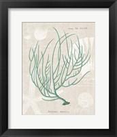 Gorgonia Miniacea on Linen Sea Foam Framed Print
