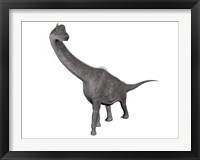 Brachiosaurus dinosaur, white background Framed Print