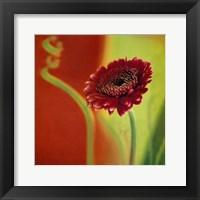 Framed Summer Colours 3