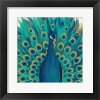 Framed Proud as a Peacock I