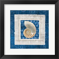 Framed Sea Shell II on Blue