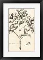 Framed Tropical Leaf Study I