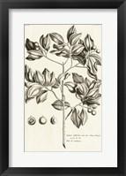 Framed Tropical Leaf Study II
