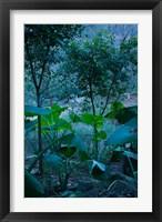 Framed Temple Garden, Fengdu, Chongqing Province, China