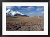 Framed Towards The Summit Of Kongmaru La, Markha Valley, Ladakh, India