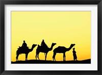 Framed Camels and driver at sunset, Thar Desert, Jodhpur, India