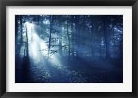 Framed Beam of light in a dark forest, Liselund Slotspark, Denmark