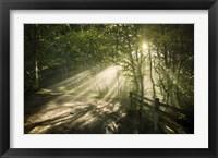 Framed Sunrays shining through a dark, misty forest, Liselund Slotspark, Denmark