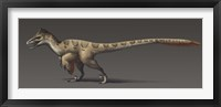 Framed Utahraptor ostrommaysorum, the largest known dromaeosaur