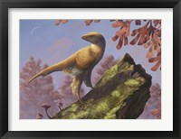 Framed Eosinopteryx brevipenna perched on a tree branch