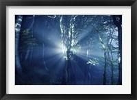 Framed Misty rays in a dark forest, Liselund Slotspark, Denmark