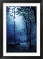 Framed Misty, dark forest, Liselund Slotspark, Denmark