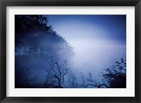 Framed Silhouettes of trees and branches in a dark, misty forest, Denmark