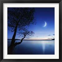 Framed Silhouette of a lonely tree in a lake against a starry sky and moon