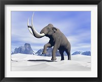 Framed Large mammoth walking slowly on the snowy mountain
