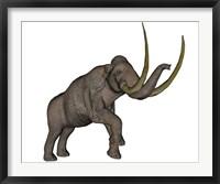 Framed Large mammoth, white background