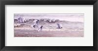 Framed Au fil de l'eau- Mouette de Bonaparte