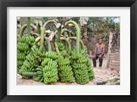 Framed India, Meghalaya, Bajengdoba, Bananas and the man who picked them