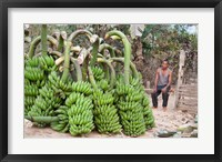 Framed India, Meghalaya, Bajengdoba, Bananas and the man who picked them