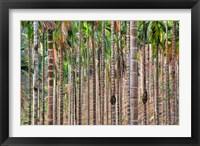 Framed Beetle nut tree trunk detail, Bajengdoba, Meghalaya, India