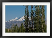 Framed India, Ladakh, Leh, Trees in front of snow-capped mountains