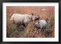 Framed Indian Rhinoceros in Kaziranga National Park, India