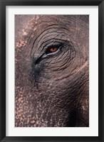 Framed Asian Elephant's Eye, Kaziranga National Park, India