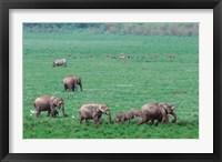 Framed Asian Elephant in Kaziranga National Park, India