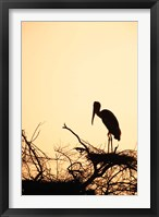 Framed Painted Stork in Bandhavgarh National Park, India