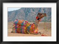 Framed Brightly decorated camel, Pushkar, Rajasthan, India.