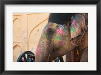 Framed Decorated elephant at the Amber Fort, Jaipur, Rajasthan, India.