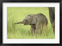 Framed Asian Elephant,Corbett National Park, Uttaranchal, India