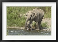 Framed Elephant on riverbank, Corbett NP, Uttaranchal, India