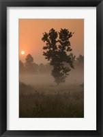 Framed Kanha National Park, India